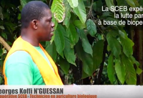 Le commerce équitable au service de la transition écologique de la filière cacao en Côte d'Ivoire
