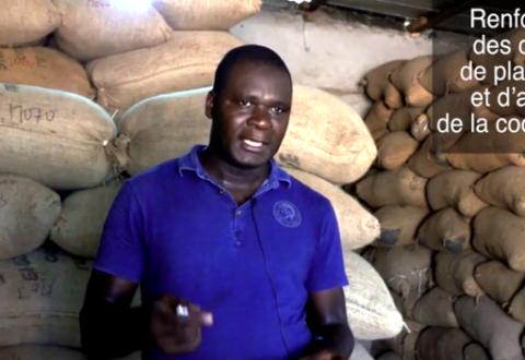 Le commerce équitable : levier de renforcement des coopératives et de leurs réseaux en Côte d'Ivoire