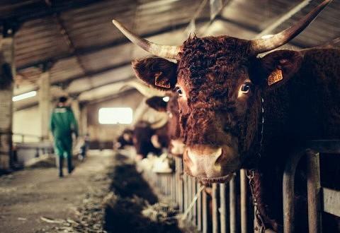 [Tribune] Politique agricole commune : à quand un virage agroécologique ?