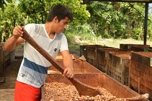 Producteur de cacao de la coopérative Norandino au Pérou