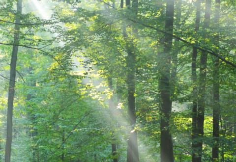 La fiscalité environnementale dans un esprit de justice sociale