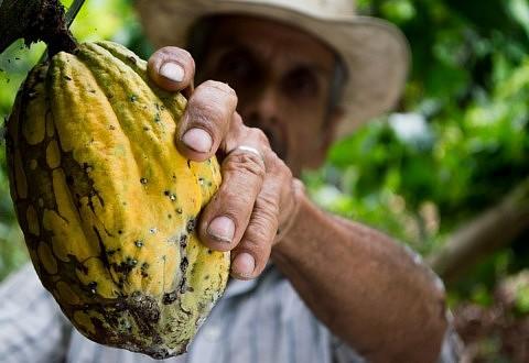 Le commerce équitable, un levier puissant pour rendre la filière cacao plus durable