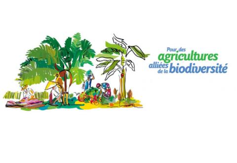 Peut-on concilier sécurité alimentaire et biodiversité ?